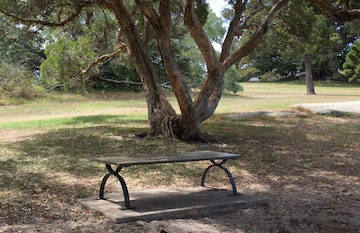 Bench for Queens Park Dog Walkers